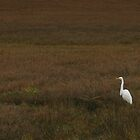 Early Morning Egret by Kat Meezan