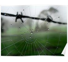 Barbed Wire and Web Dew Drops Poster