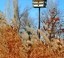 The Bird House by Madeline M  Allen