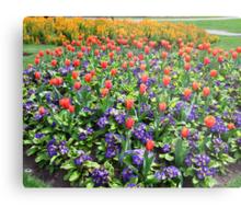 Tulips On Display (2) Metal Print