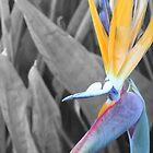 Birds by Neil Baffert