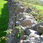 Stone Fence, Ireland by Cathy Klima