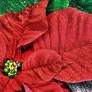 Christmas Poinsettia___for my friend Joyce (Fara) by Poete100