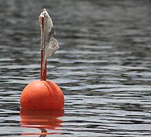 boy o bouy by picketty