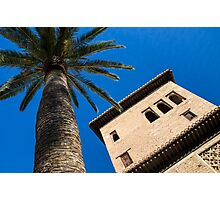 Shady Palm Photographic Print