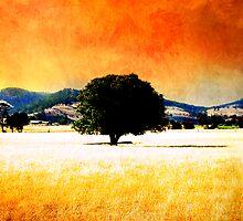 Shade Oasis by Tony Lomas