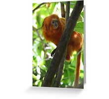 Golden Lion Tamarin Greeting Card