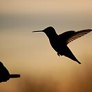 Humming Bird at Sunset by sriddle77