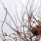 Nest in Red Berry Tree by Nalinne Jones