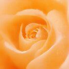 Aroma Of Love by bnilesh