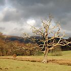 Old tree, Derwentwater by Julie M Gibson