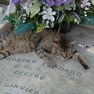 03 - CEMETERY CAT, MONTPARNASSE, PARIS (D.E. 2005) by BLYTHPHOTO