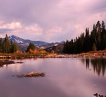 Beaver Pond by Chase Ankeny