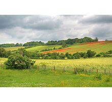 Elderflowers, Daisies, Buttercups, and Poppies Photographic Print