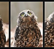 Whisper the Morepork by Mikester