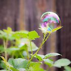 Soap Bubble II by Colleen Farrell