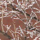 branches by gypsykatz