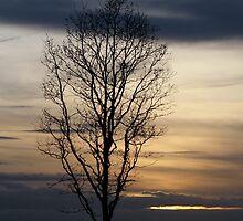 Sunset 3 02-02-08 by Sharon Perrett