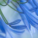 Love is not blue, flowers by Kornrawiee