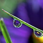Water Refraction in Rain Drop 1 by Debbie Sickler