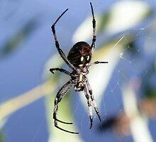 Itsy Bitsy Spider by Debbie Sickler