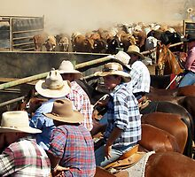Bringing in the Campdraft cattle - Kiana Station NT 2007 by Josephine Shearn