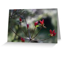 Spring Botanicals - Bokeh Buds Greeting Card