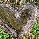 Rooted in Love II by Bonnie T.  Barry