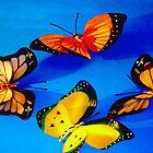 Butterfly Blue by RockyWalley