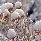 Winter Plants by Judson Joyce