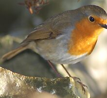 My Dear Little Robin Friend  by ApeArt