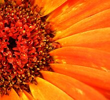 Orange Explosion by Kobalt