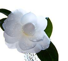 Whiteout by Jonicool