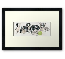 Border Collie Puppies Framed Print