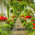 Christmas Greetings in the Fernery by Marilyn Cornwell