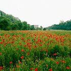 Poppy Field, Lake Guarda, Italy by Lisa Wilson