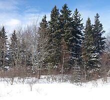 NC Silky winter #4 by Albert1000