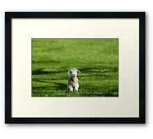 Hey You Guys! Framed Print