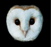 The Face of a Barn Owl by Dave  Knowles