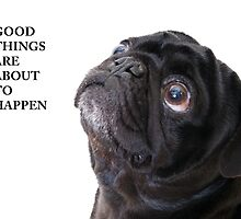 Good things black pug by Ilze Lucero