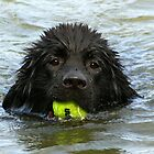Swimming by Debbie Bryant