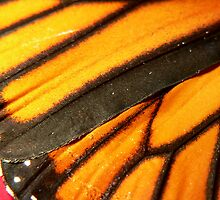 Wing of a Monarch by Margot Kiesskalt