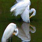 Two Egrets, or Three?   331 Views by Rosalie Scanlon