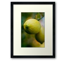 Just a Lemon Framed Print