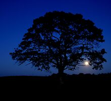 Moon rising over Lonely tree, Stewiacke by Rob vanNostrand