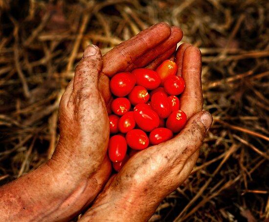 Gardeners rewards by Peter Hodgson