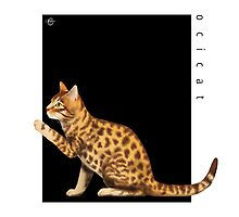 Cat Breeds: Ocicat - Black Background by Martine Carlsen