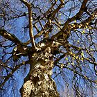 Nature's tracery by Mortimer123