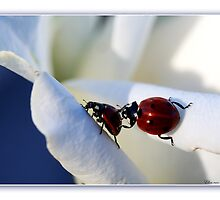 Ladybug-friendship. by Ellen van Deelen