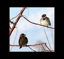 Sparrow Love by Ryan Houston